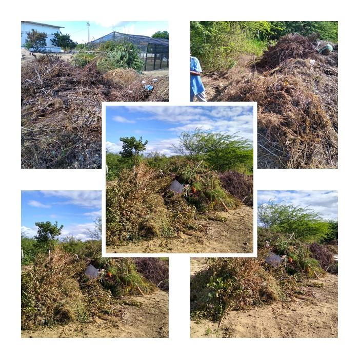 Projeto da agricultura gera sustentabilidade e cuidados com meio ambiente