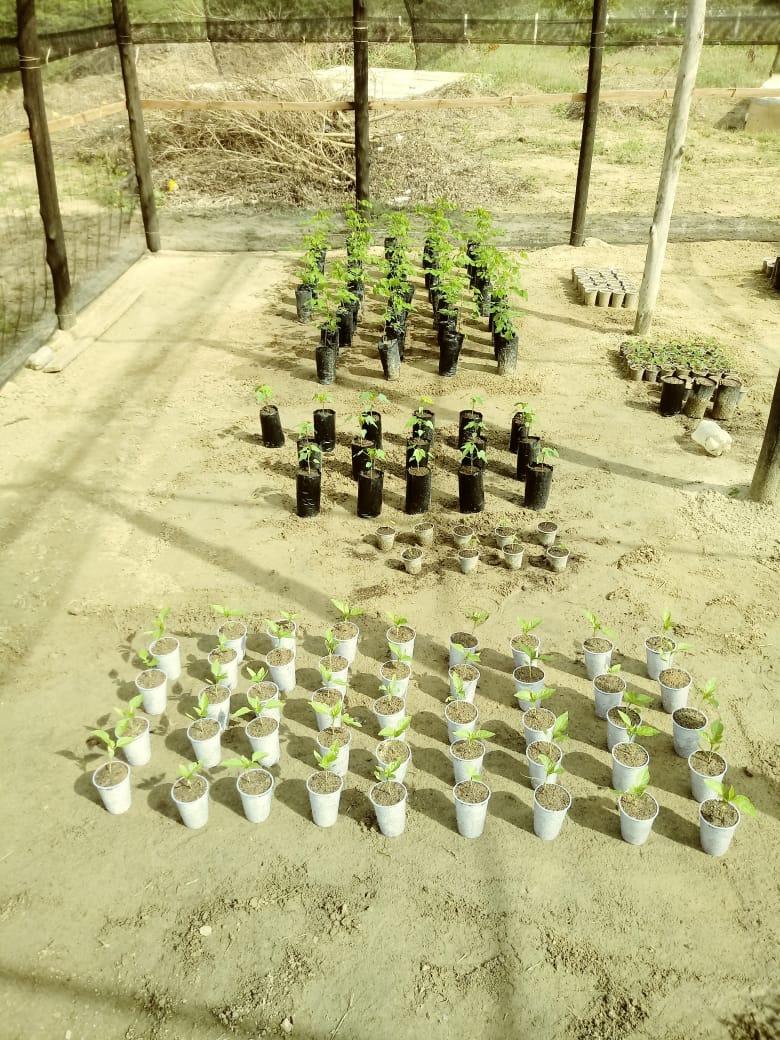 Ação da agricultura tem o objetivo de retomar culturas que já foram dizimadas